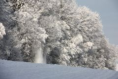 Edge of wood after a snowfall. Royalty Free Stock Image