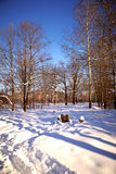 Edge of wood in the winter Royalty Free Stock Photo