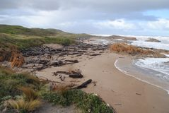 Edge of the world. Edge of the world, the mouth of the Arthur river in Tasmania Stock Images