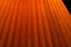 Edgy bright wooden texture. Close up of part of bright edgy wooden surface Royalty Free Stock Photo