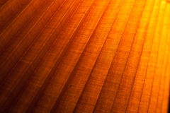 Edgy bright wooden texture. Close up of part of bright edgy wooden surface Royalty Free Stock Image