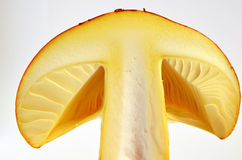 Edible Amanita Caesarea or Caesar's Mushroom 5 Royalty Free Stock Photo
