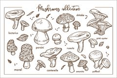 Edible And Inedible Ripe Forest Mashrooms Monochrome Collection Stock Photography