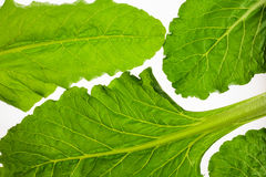 Edible beetroot leaf isolated on white background, foliage pattern Royalty Free Stock Photography