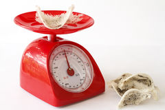 Edible bird's nest and kitchen scales. Edible bird's nest and red kitchen scales Stock Image