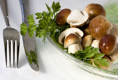 Edible boletus Stock Photography