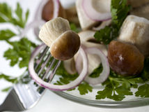 Edible boletus Stock Image