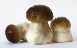 Edible boletus Royalty Free Stock Photography
