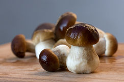 Edible boletus Stock Photos