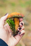 Edible boletus mushroom in female hand Stock Images