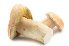 Edible boletus mushrooms Stock Photo