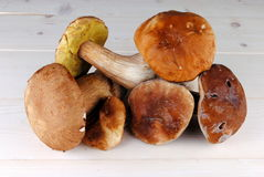 Edible boletus mushrooms Royalty Free Stock Photo