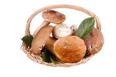 Edible boletus mushrooms in a straw basket Stock Images