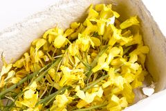 Edible cabbage flowers Stock Photography