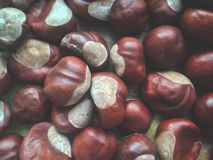 Edible chestnut for new year. From Armenia royalty free stock images