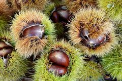 Edible chestnuts Castanea Sativa on market. Edible chestnuts Castanea Sativa with incrustation on market Royalty Free Stock Images