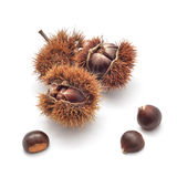 Edible chestnuts Royalty Free Stock Image