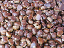 Edible chestnuts Stock Photography