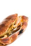 Edible crab. cancer pagurus Stock Photo