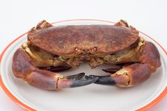 Edible crab ( cancer pagurus ). On a plate Stock Photography
