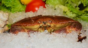 Edible crab and ice royalty free stock photos