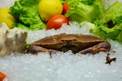 Edible crab and vegetables royalty free stock photos