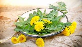 Edible dandelion leaves Stock Image