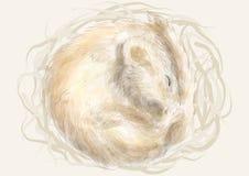 Edible dormouse. Animal sleeping in a nest Stock Photography