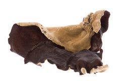Edible Dried Fungus Macro Stock Image