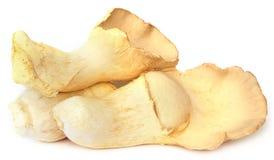 Edible Eryngii mushroom Stock Image