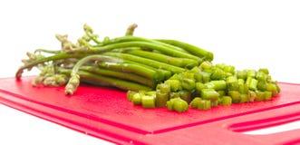 Edible fern - Pterídium aquilínum Royalty Free Stock Images