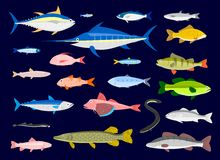Edible Fishes. 22 Edible Fishes in simplified flat  cartoon Royalty Free Stock Photography