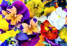 Edible Flowers Stock Photos