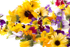 Edible Flowers Isolated Stock Photos