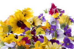 Edible Flowers Isolated. Isolated macro image of edible flowers Royalty Free Stock Photography