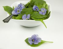 Edible flowers in salad Royalty Free Stock Image