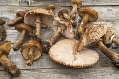Edible forest mushrooms on wooden background Stock Photo
