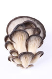 Edible fungi mushroom. S with white background Stock Images