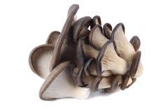 Edible fungi mushroom Royalty Free Stock Images