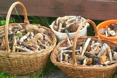 The baskets are filled with fresh mushrooms Stock Photography