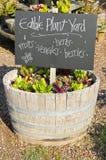 Edible Garden in a Wine Barrel. A small vegetable garden in a wine barrel stock image