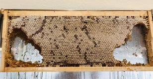Edible Honey wax royalty free stock photography