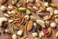 Edible insects and nuts Stock Photo
