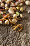 Edible insects and nuts Stock Photography