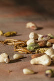 Edible insects and nuts Royalty Free Stock Image