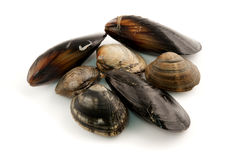 Edible molluscs Royalty Free Stock Photography