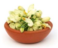 Edible moringa flower on a brown bowl Royalty Free Stock Image