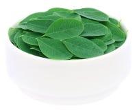 Edible moringa leaves Stock Photography