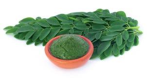 Edible moringa leaves with ground paste Royalty Free Stock Photo