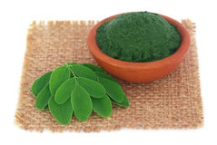 Edible moringa leaves with ground paste Stock Images